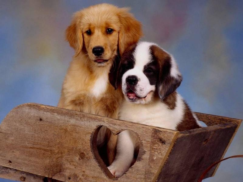 Razze di cani piccoli e bellissimi immagini ispirazione for I cani youtube