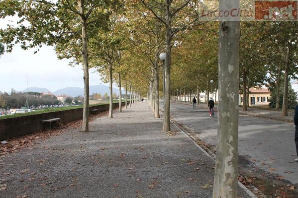 I colori autunnali delle Mura Cittadine - www.luccacitta.net