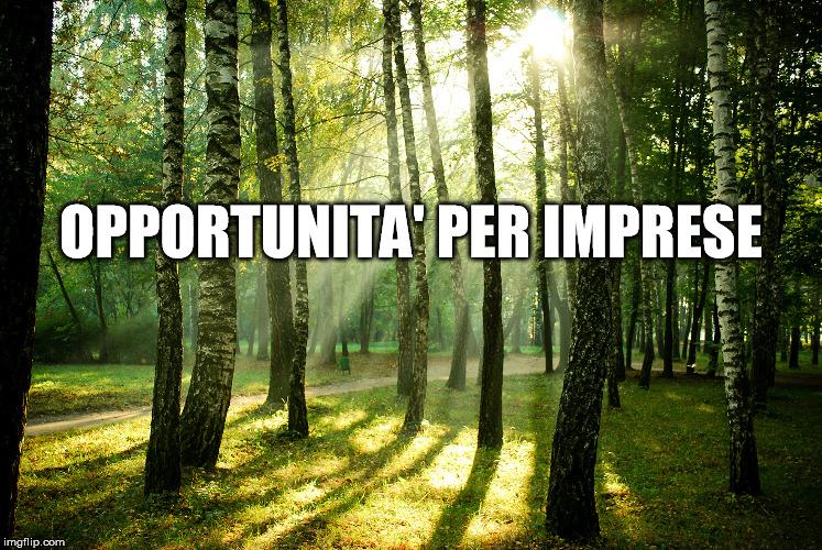 Opportunità per imprese nella filiera forestale