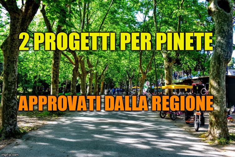 pineta Viareggio